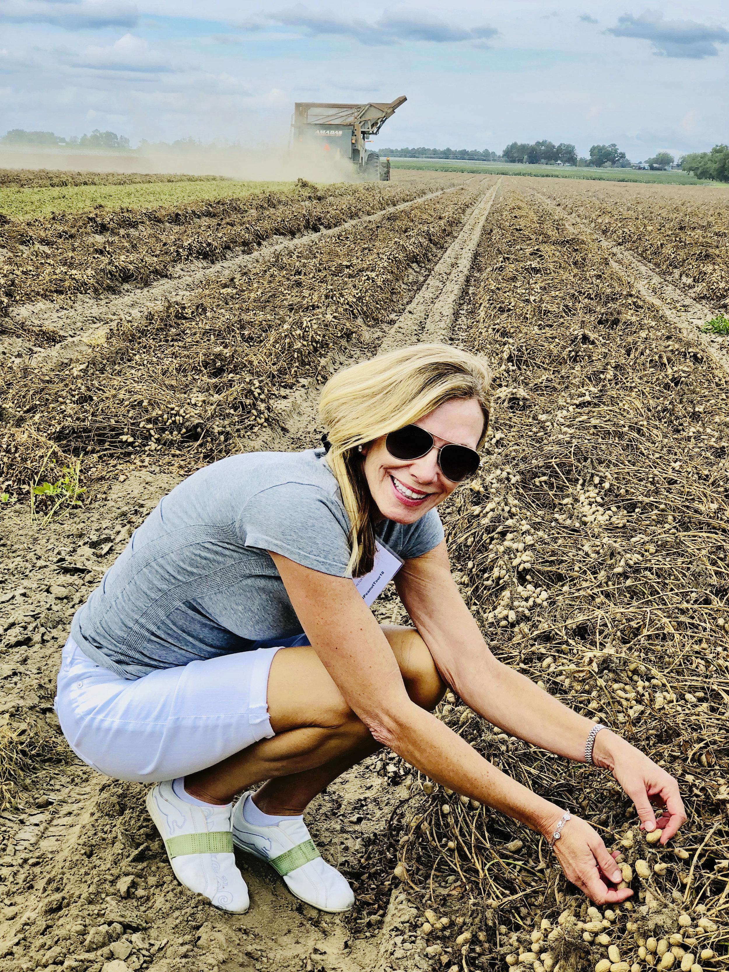 Harvesting Peanuts!