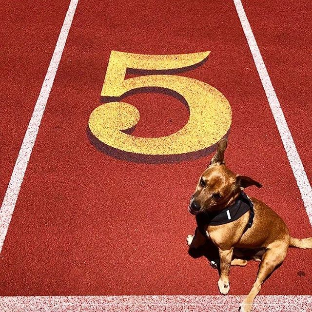 Thanks for THECUTEST #5 @lilshredder ! #sendmefives #doglife