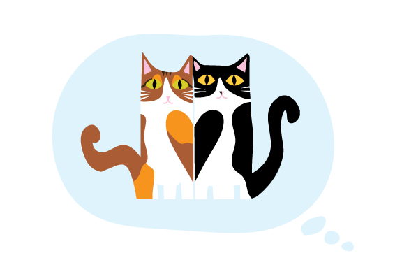 KittiesOnMyMind.png