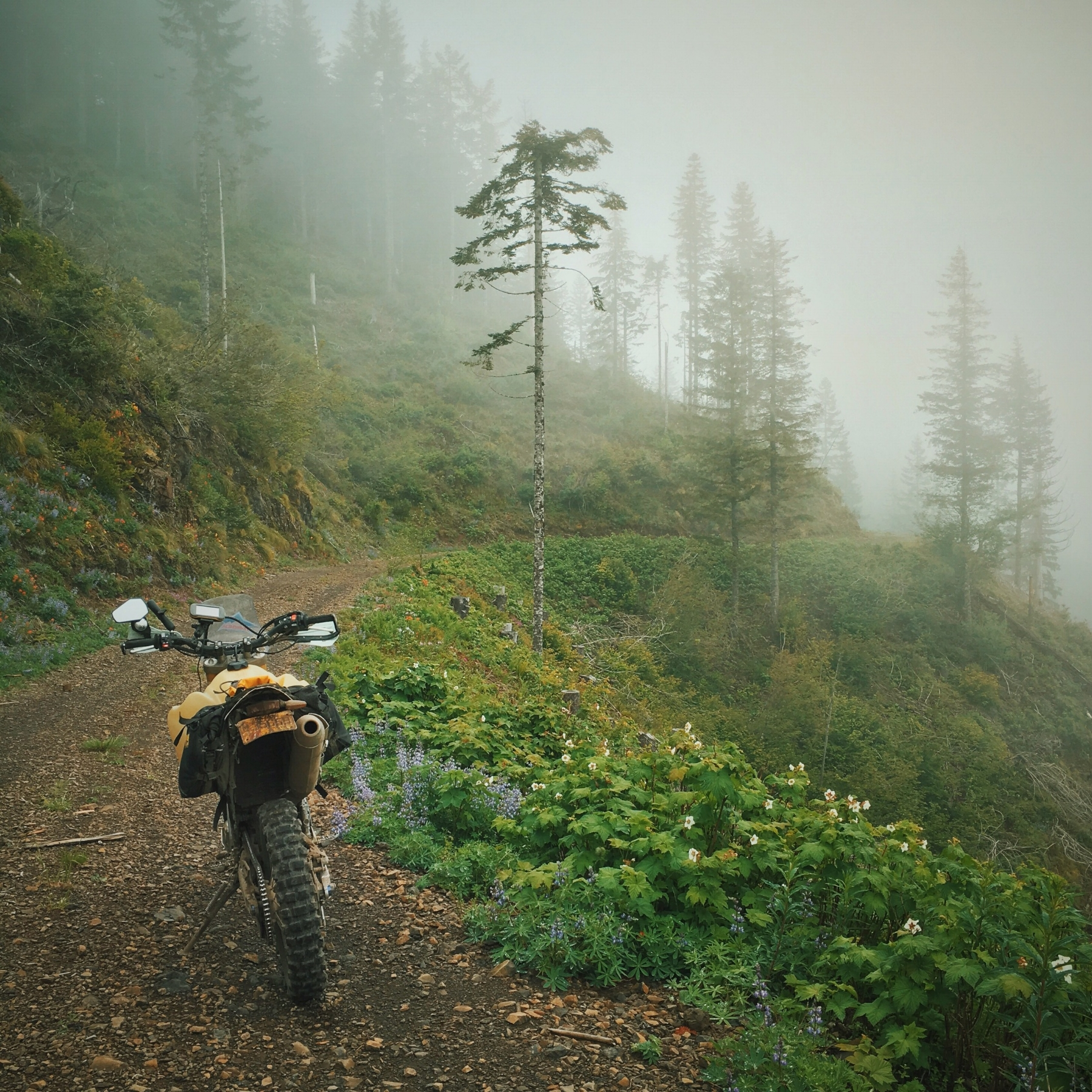 3100 feet, Fb 8N Road, Tillamook Forest, Oregon. Hiding in these clouds are giant yellow tree-eating monsters. Be careful on those corners. ☁️🚲