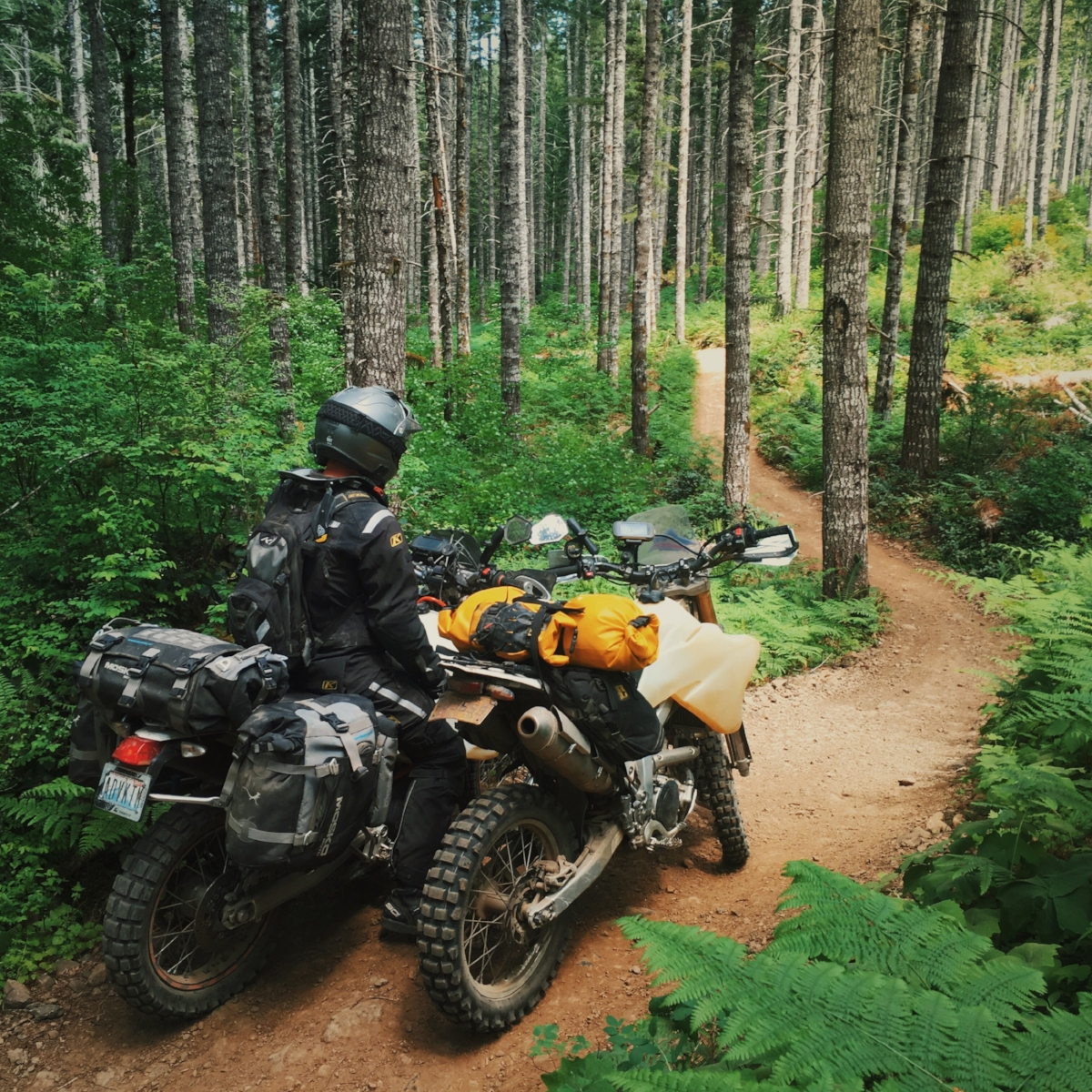 Roger's Camp Road, Tillamook Forest, Oregon. Showing Spencer all my favorite places. 🌲🚲🚲🌲