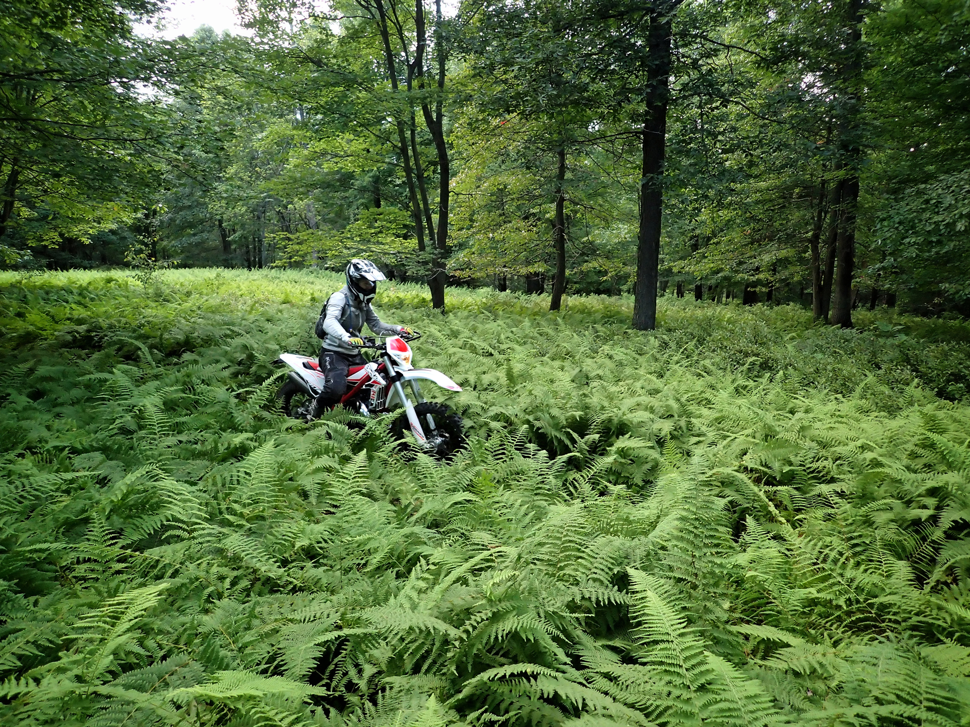 Riding the Seven Mountains Conservation Corp's (SMCC) Trails (and bike) near State College, PA.