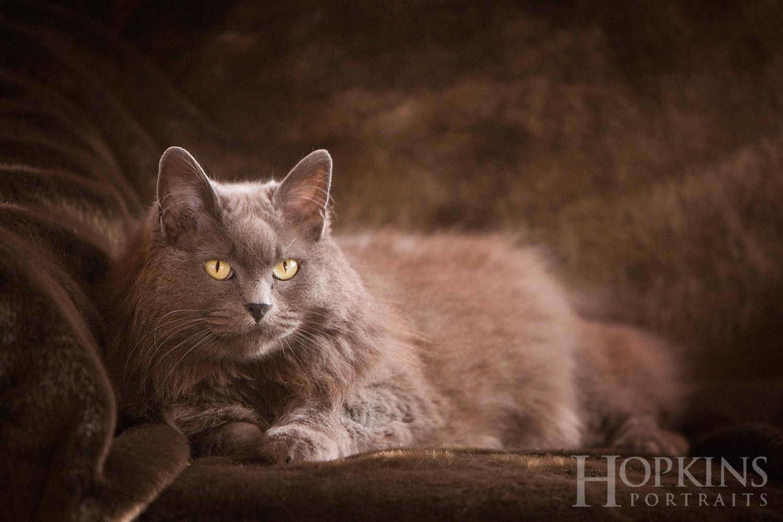 pets_cats_portraits_studio.jpg