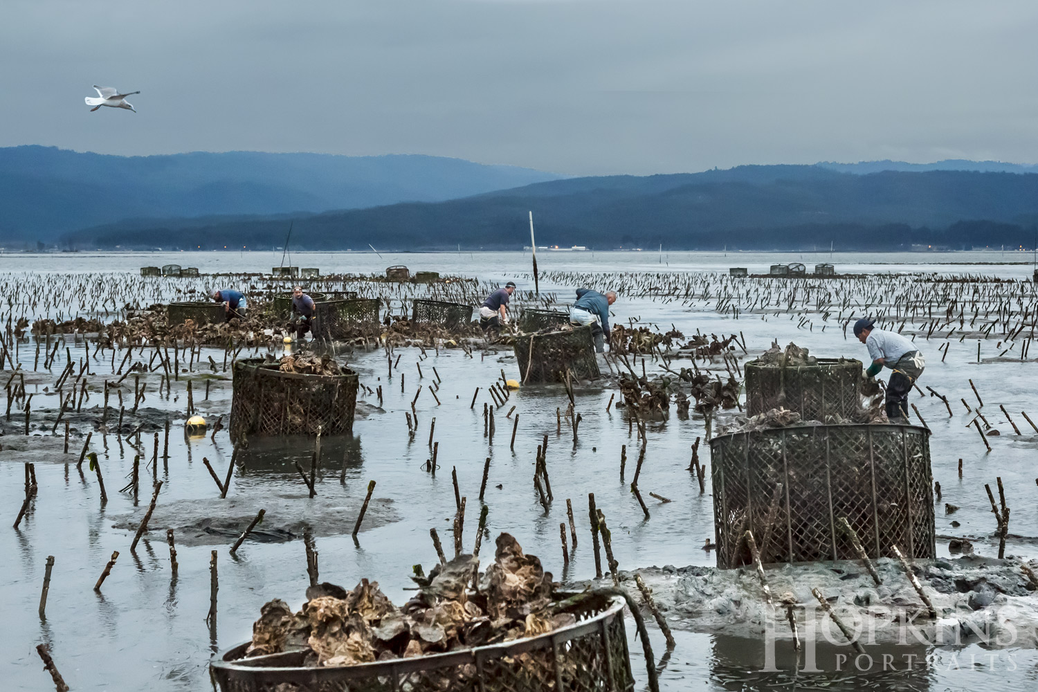 coast_seafood_oysters_humboldt_bay_photography.jpg