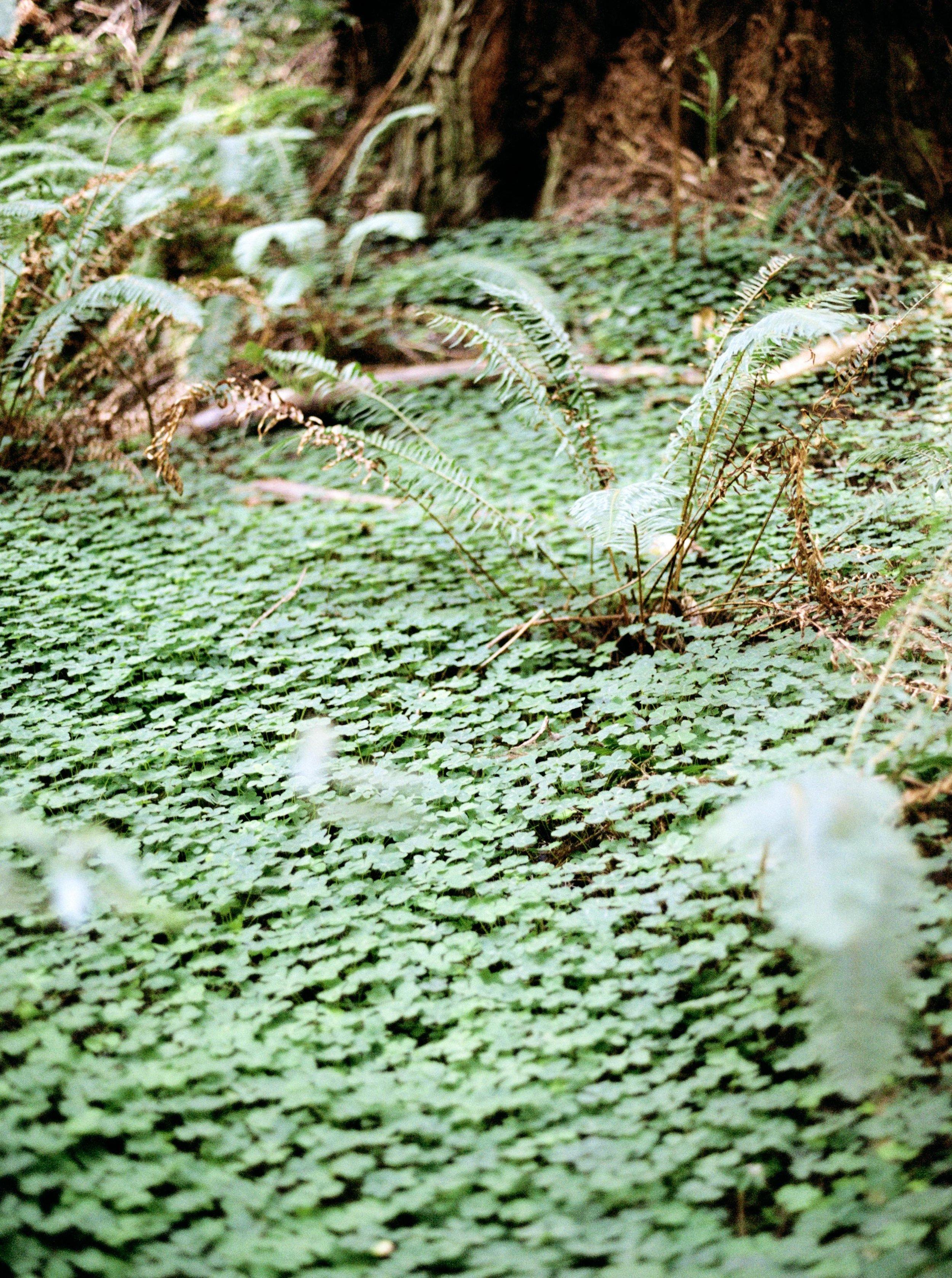 010_Krysten-Crebin-Muir-Woods-Elopement-Wedding-Photographer.jpg