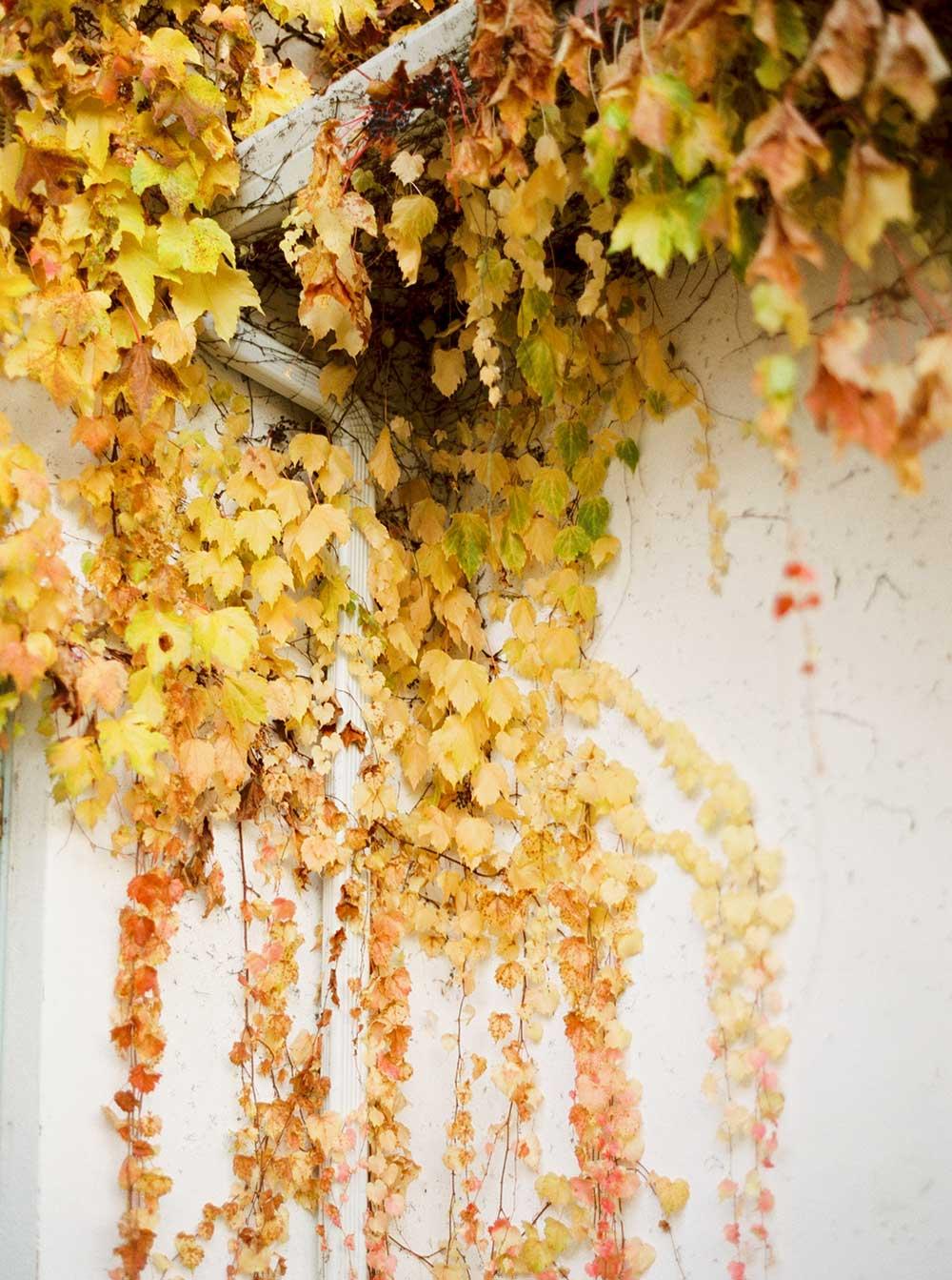 monet-vineyards-engagement-photographer-013.jpg