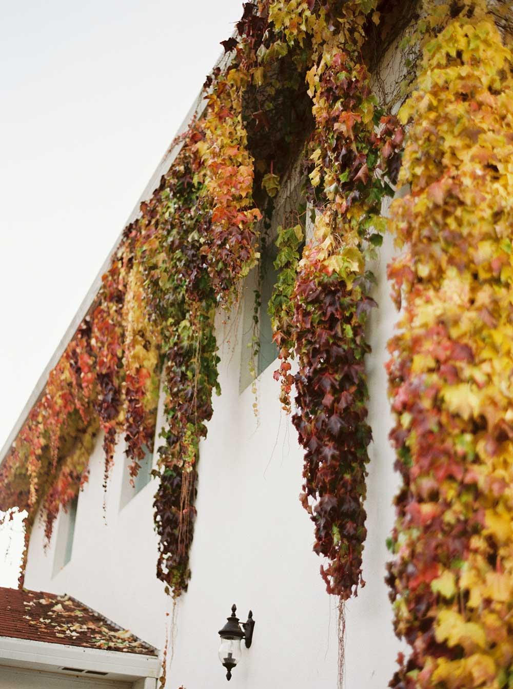 monet-vineyards-engagement-photographer-014.jpg