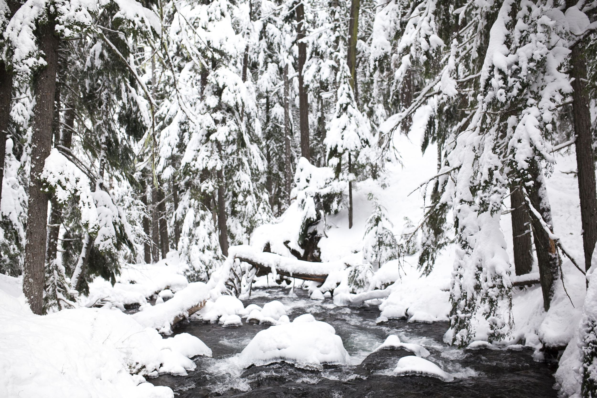 Outlive+Creative+Winter+Wonderland_0009.jpg