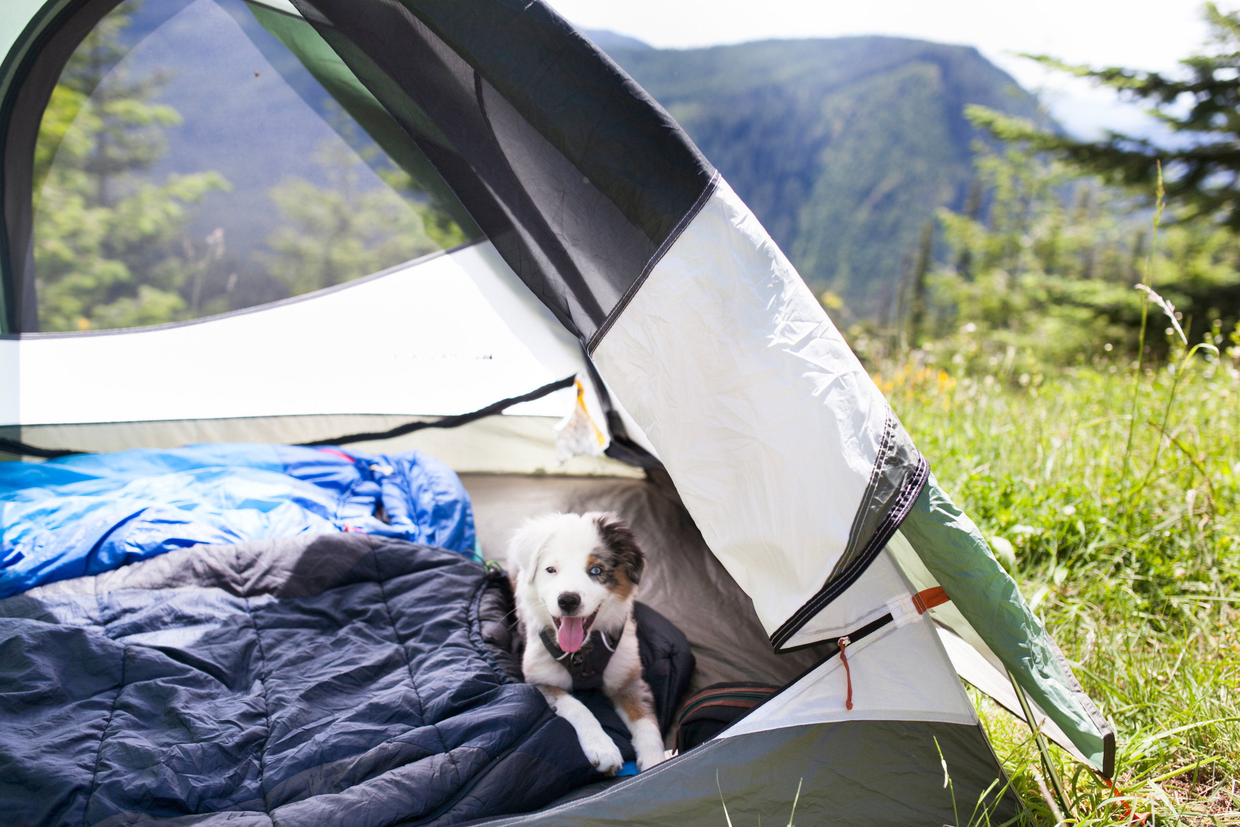078Travel_Adventure_Outdoor_Photography_Outlive_Creative_WASHINGTON_St. Helens_Dog_Tent_Camping.jpg