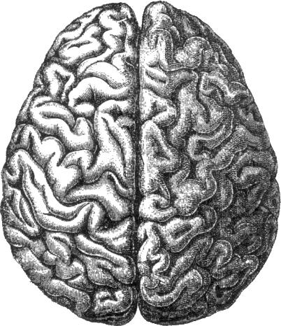 Human_brain.png