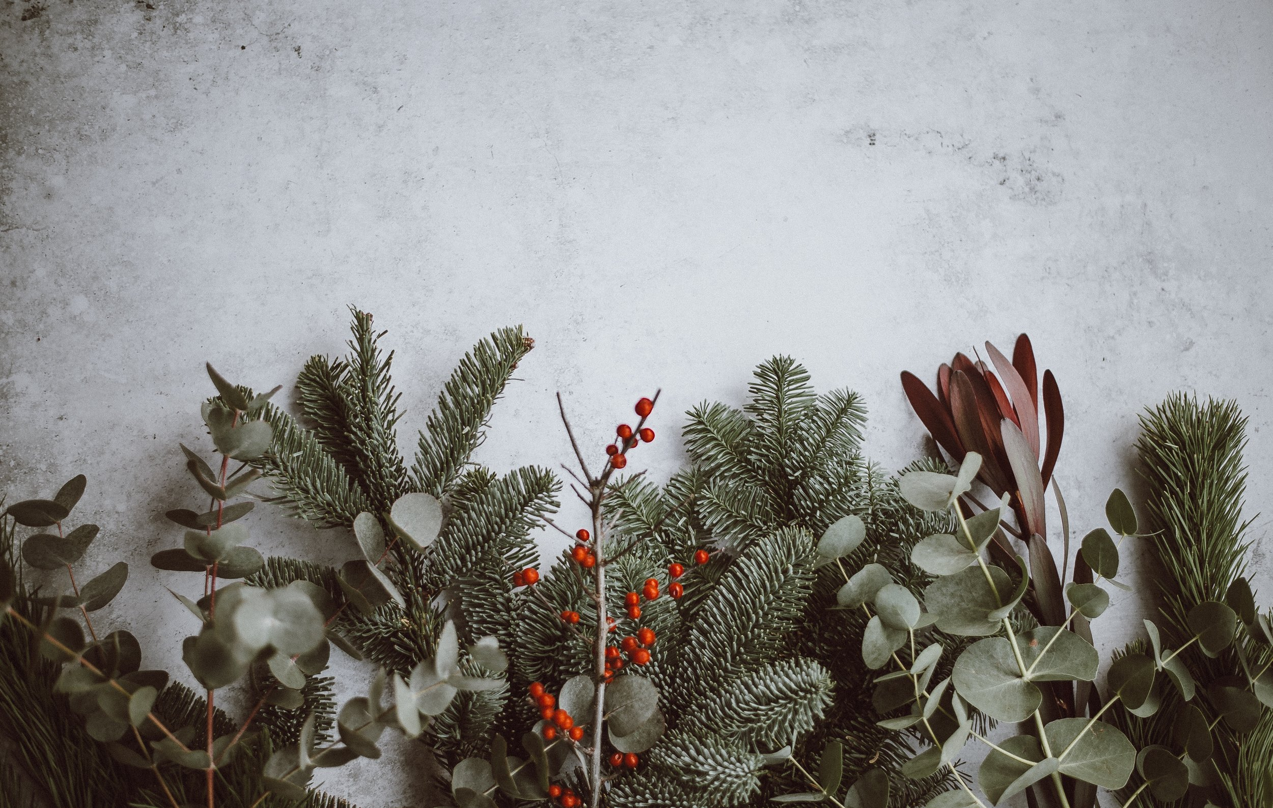 Image: Various twigs and branches of fir, eucalyptus and winterberry in front of a grey background. Photo by anniespratt on Unsplash.