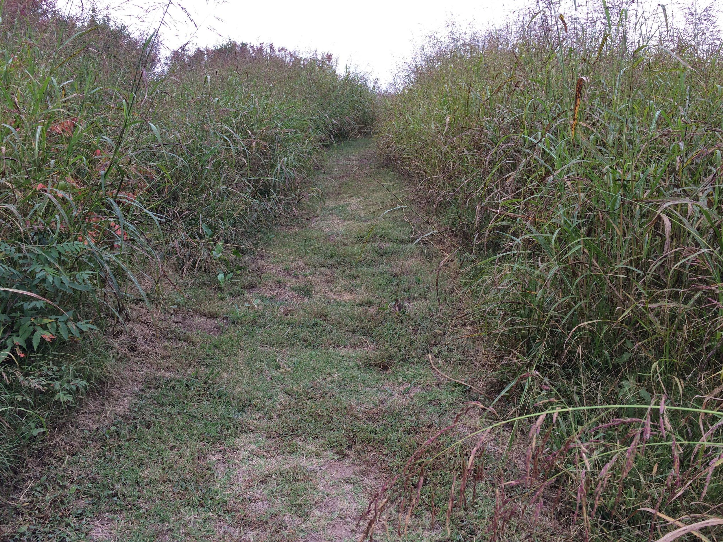Spiro mound