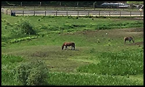 Riverhill Farm  1645 Governor Chittenden Rd Williston, VT 05495 e: Riverhill@myfairpoint.net