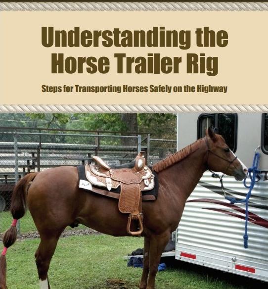 horse-rig.jpg