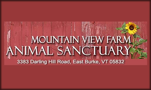 Mountain View Farm Animal Sanctuary   PO Box 38  East Burke, VT 05832 p: (802) 745-9508  w: www.mvfas.org   e: mtviewanimalsanctuary@gmail.com