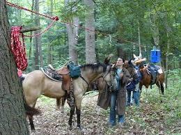 groton forest multi use trail work.jpg