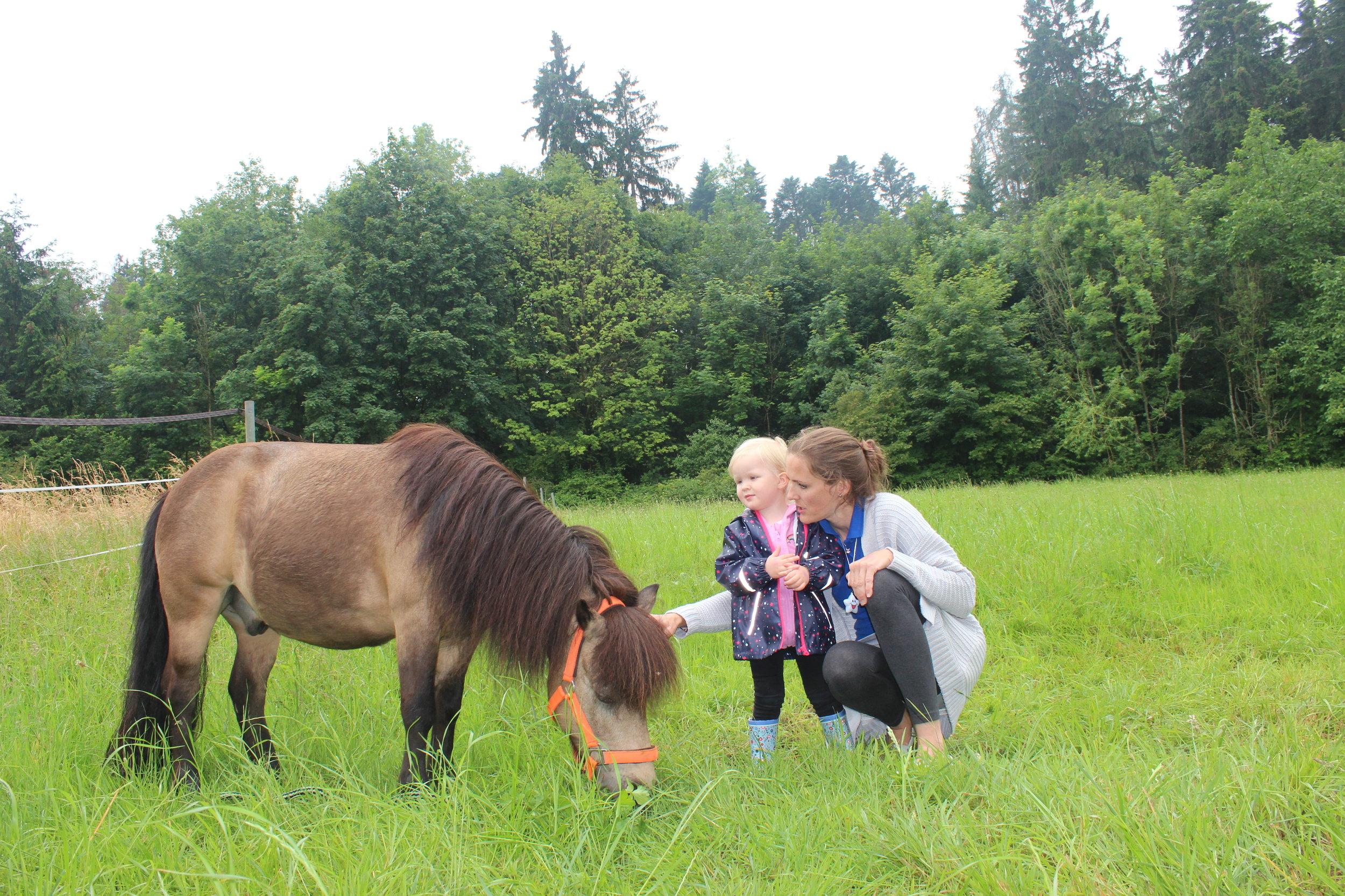 """Fotoshooting - mit unseren Hofeigenen Ponys """"Toby und Boby"""" oder mit unserem Hund Amira."""