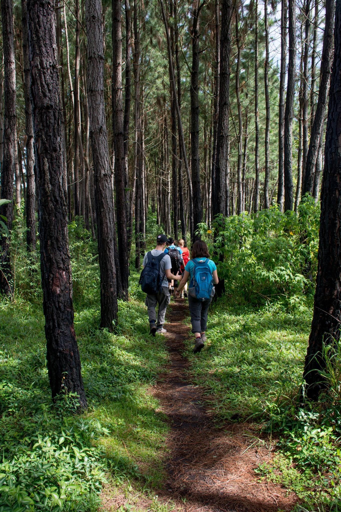 Trek the guided forest walk