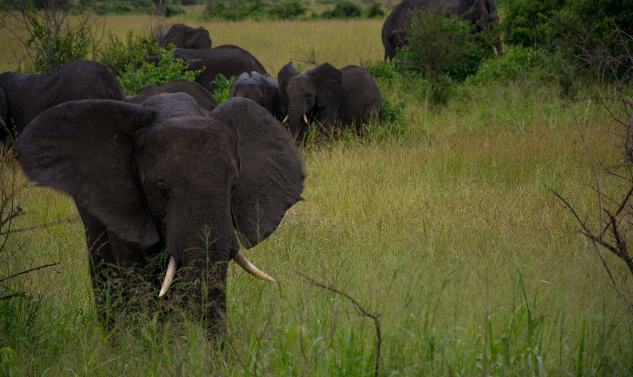 ...elephants, hippos, lions, crocodiles, warthogs and more. OR you can choose to...