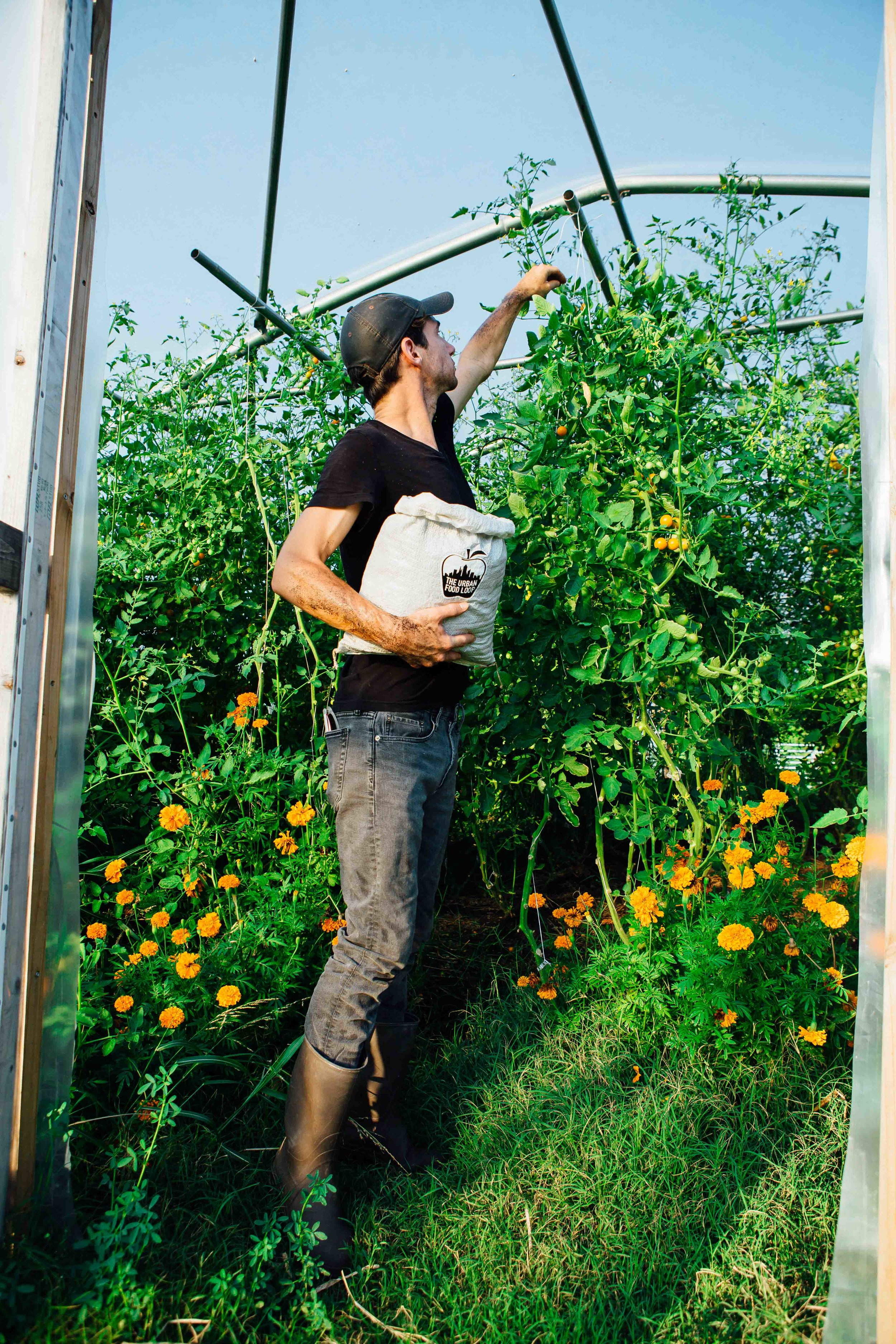 Reads pretty tall, but these cherry tomatoes are even taller.