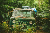 Antique cars and trucks are hidden in the woods. Photo by Malcolm Watts.