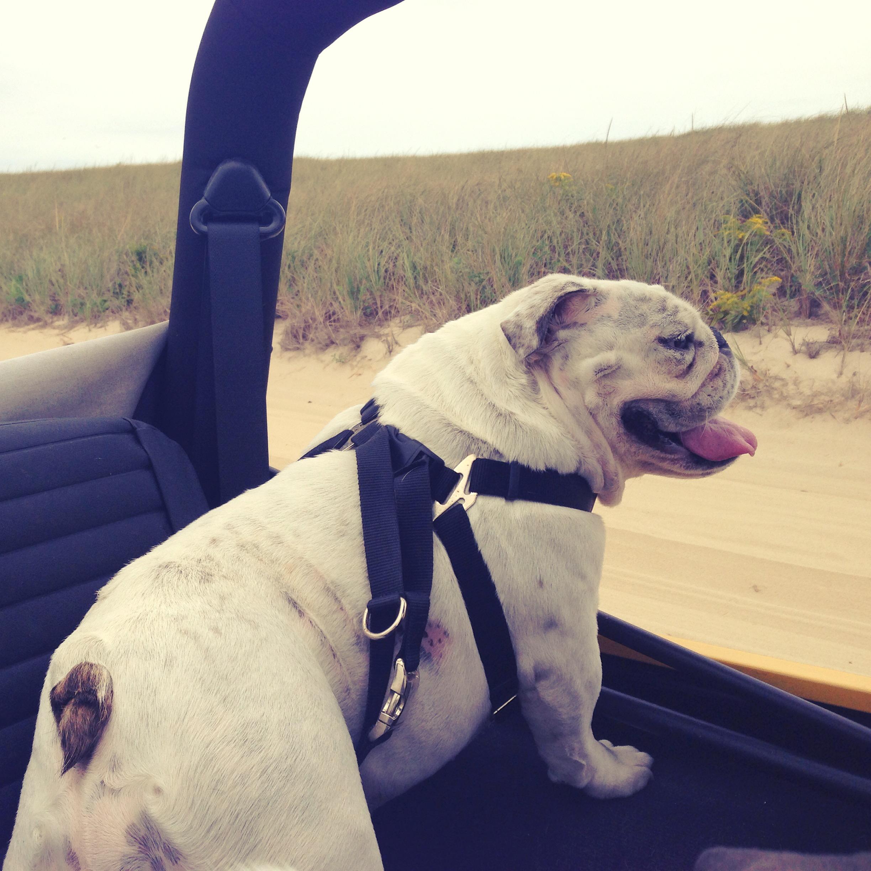 Driving Miss Winnie, Nauset Beach off-roading
