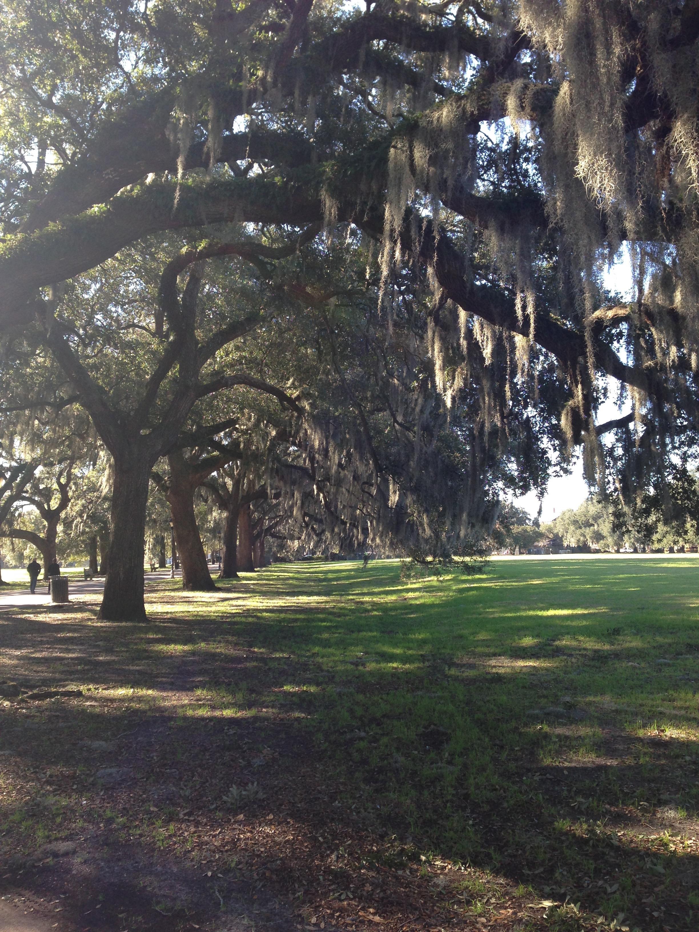 Iconic live oak trees.