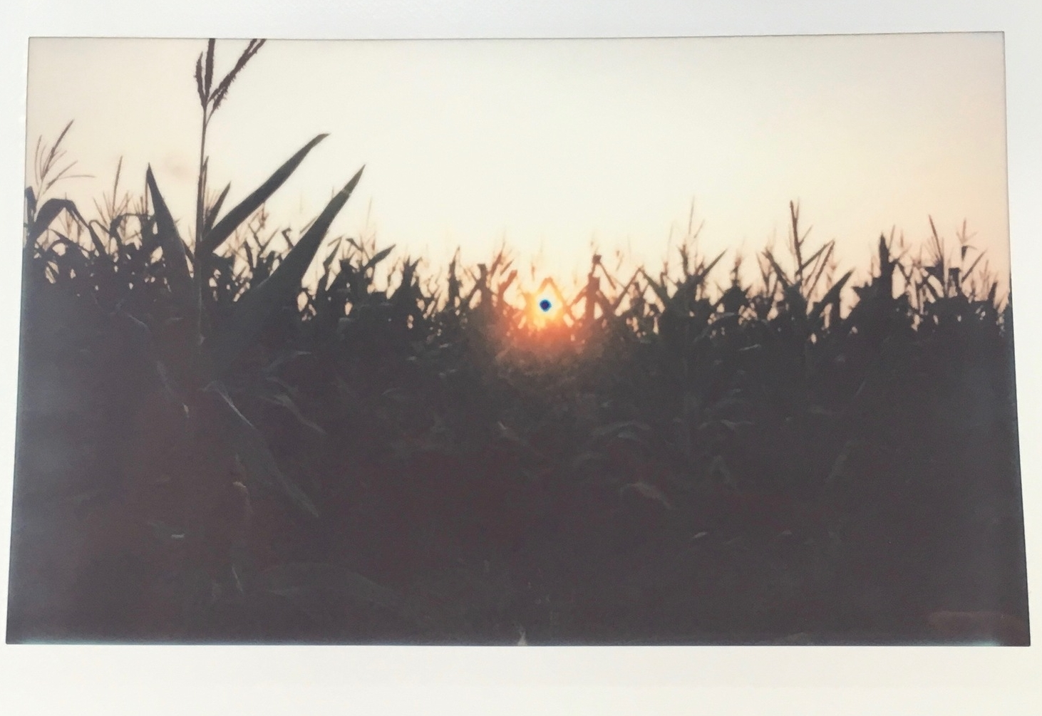 Cornfields outside Perham, MN.