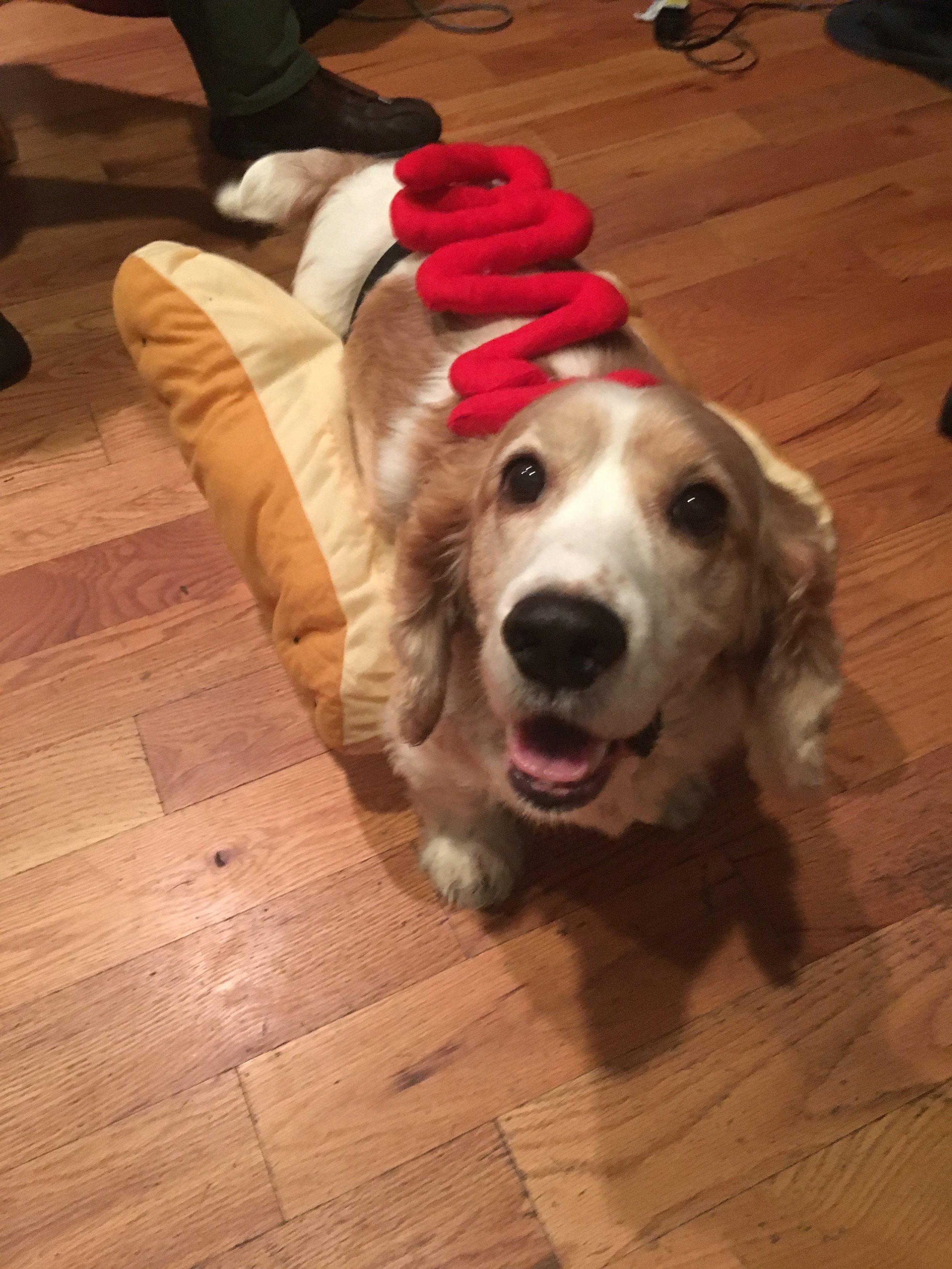 Happy Halloween! It's a Frank-furter.