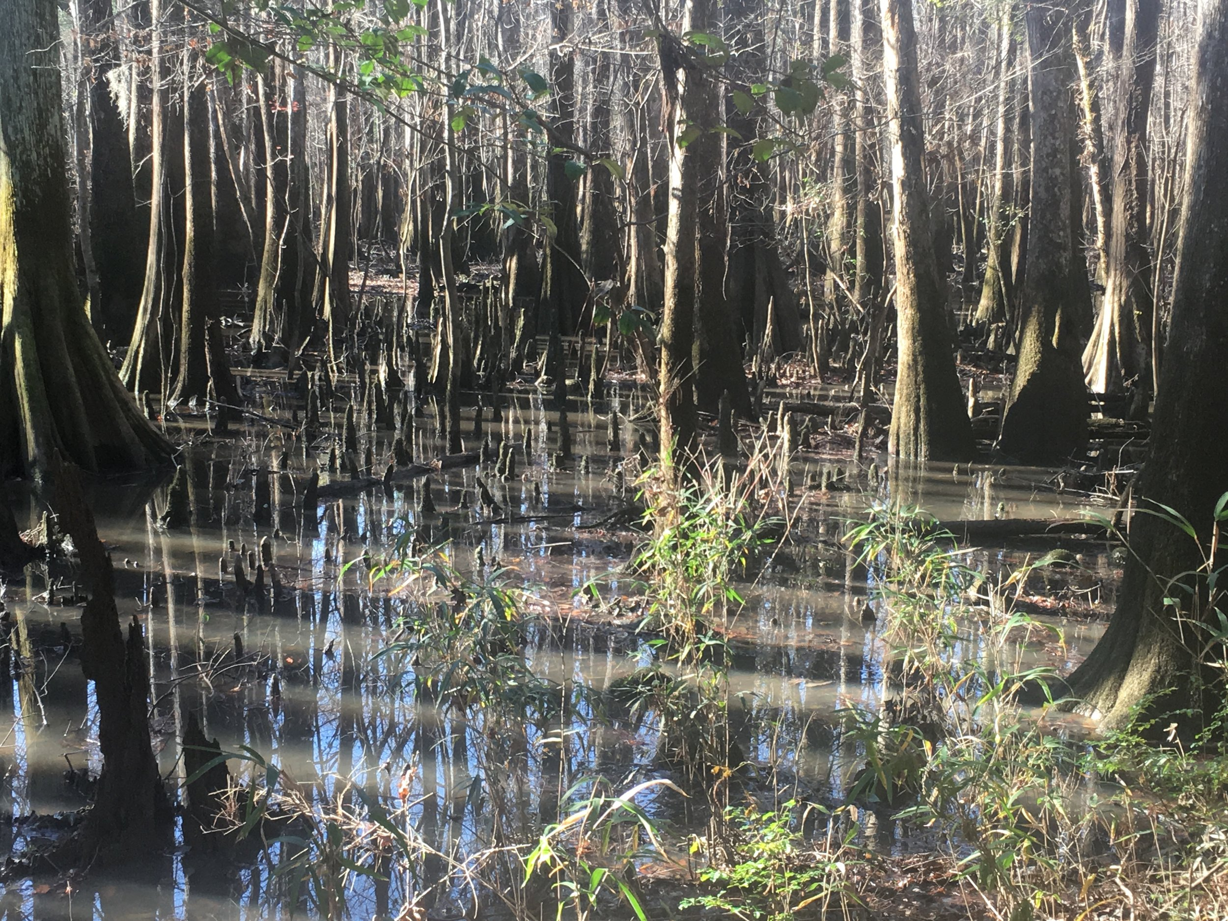Floodplain, not swamp.