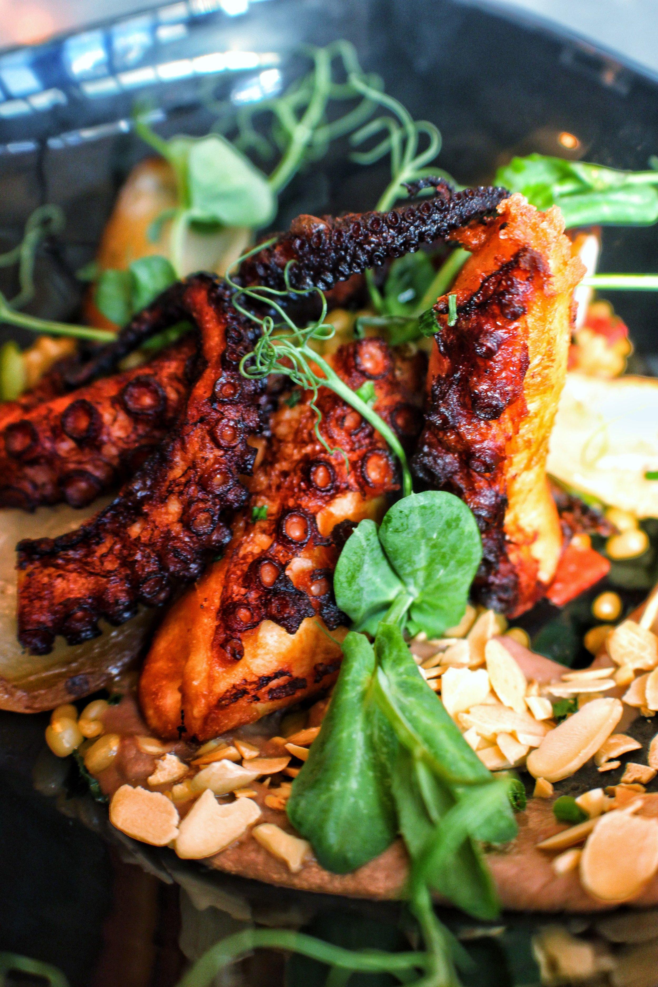 Grilled Octopus  fingerling potato, black olive puree & fennel salad