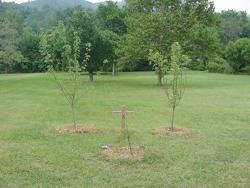 memorialtrees.jpg