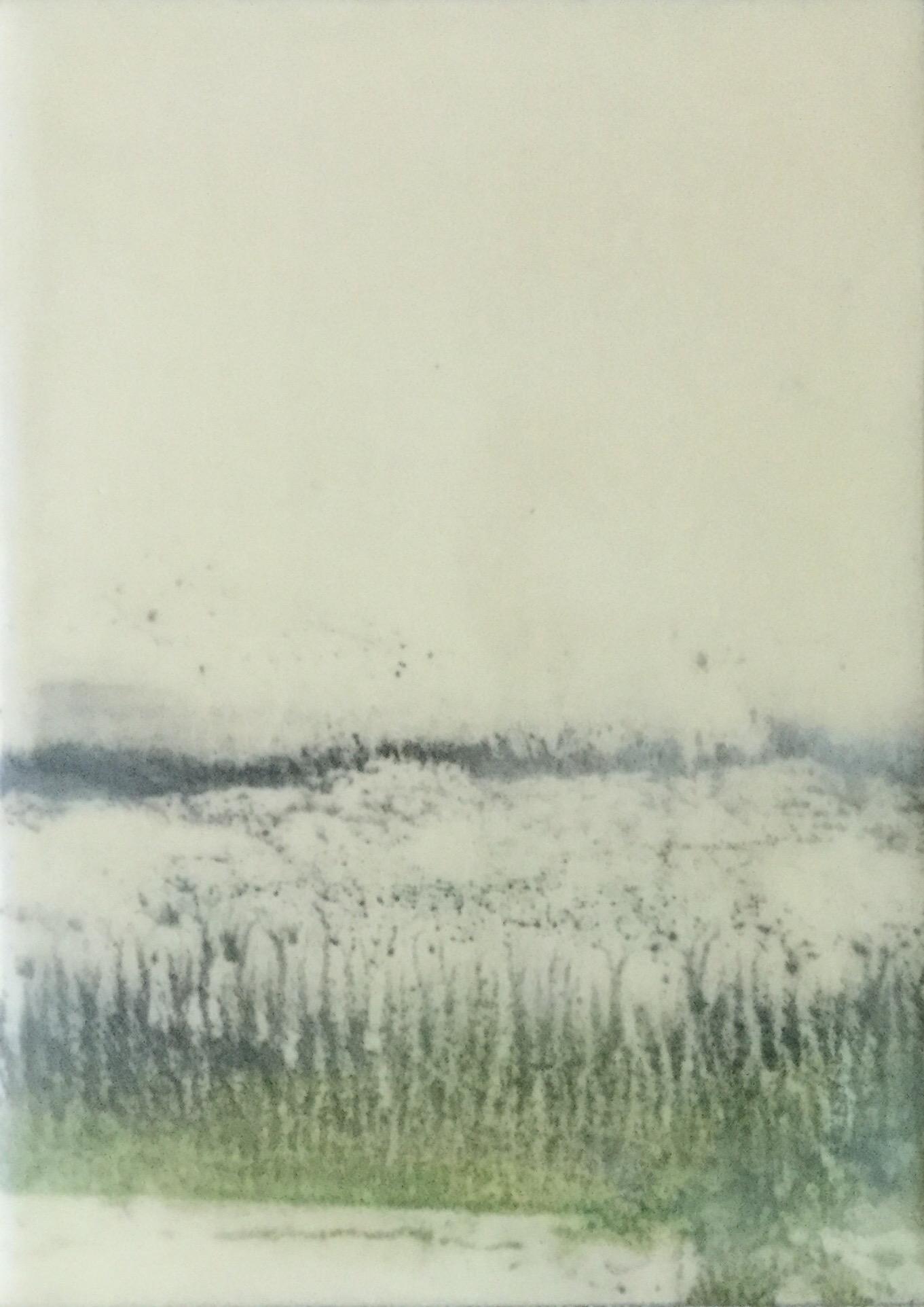 Seagrass ~ 5 x 7