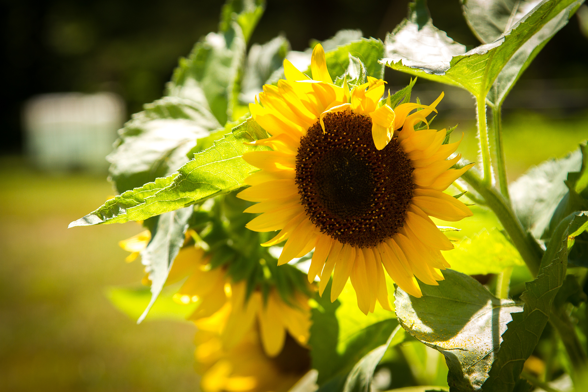 Sunflower_Art_Fest_CodyBuesing-13.jpg