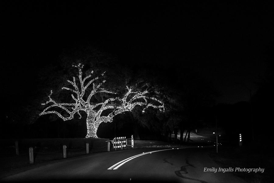This tree is at the very end and always my favorite part.