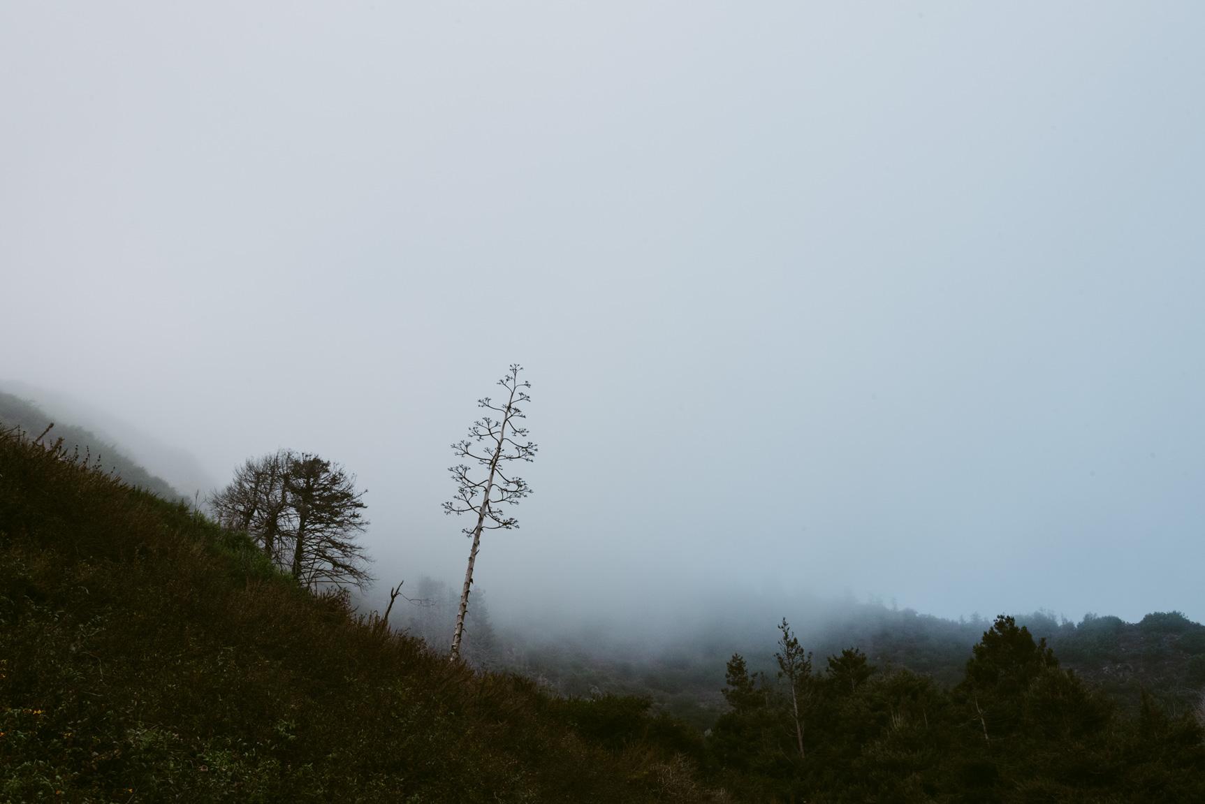 Limekiln State Park, Big Sur, US