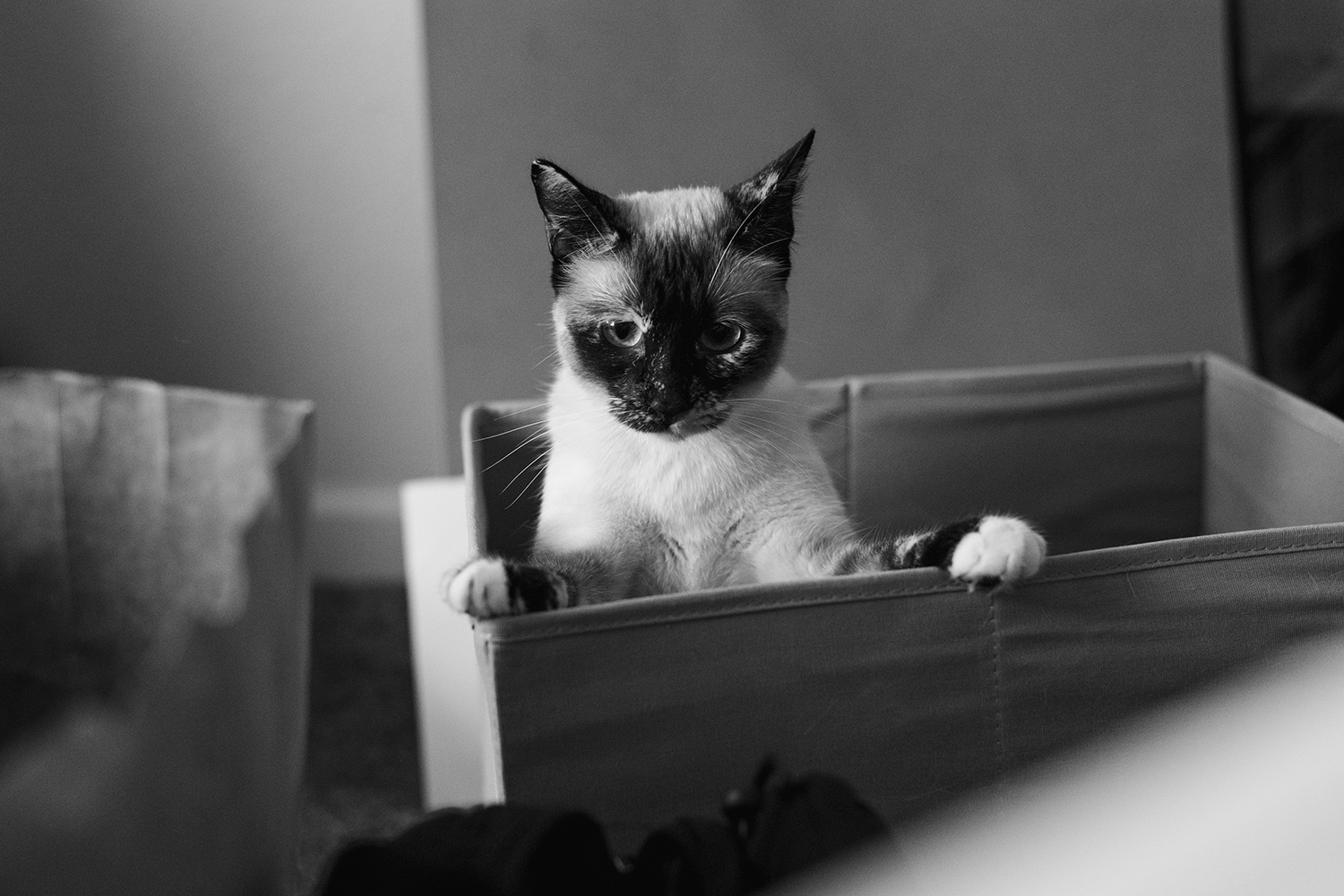 Cat in box black and white