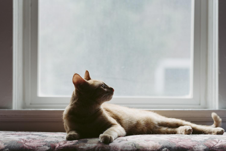 Mattis-Cat-WEB-16.jpg