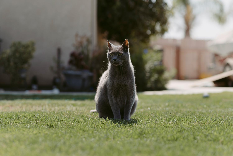 Grey cat sitting in sunny yard