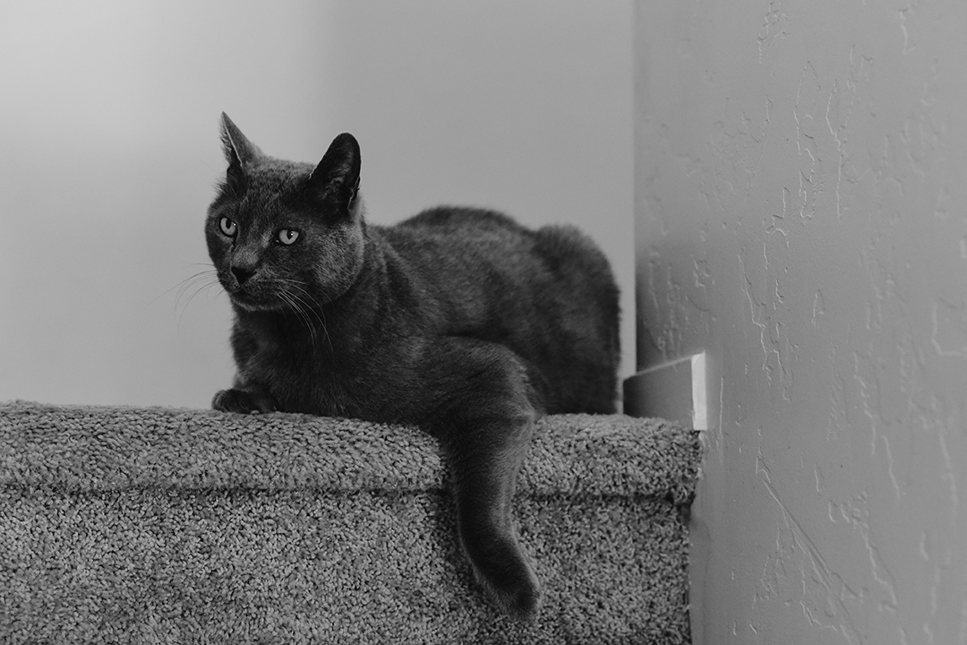 Grey cat lying on stairs, front leg at an angle