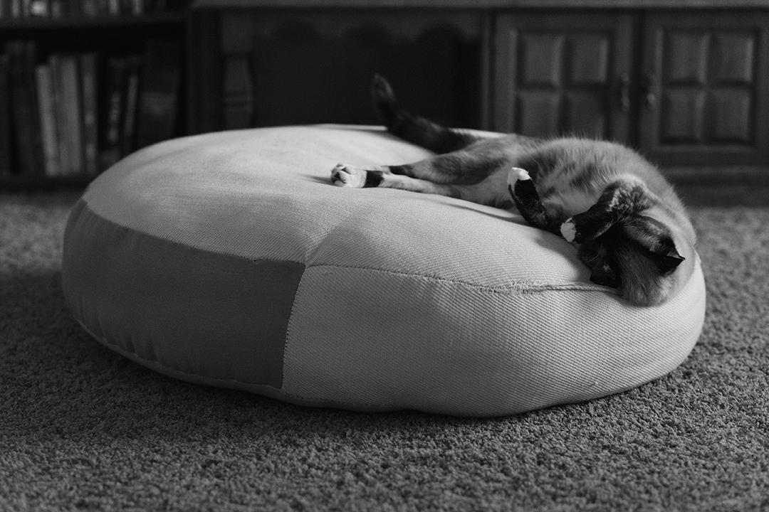 Cat sleeping on a pouf