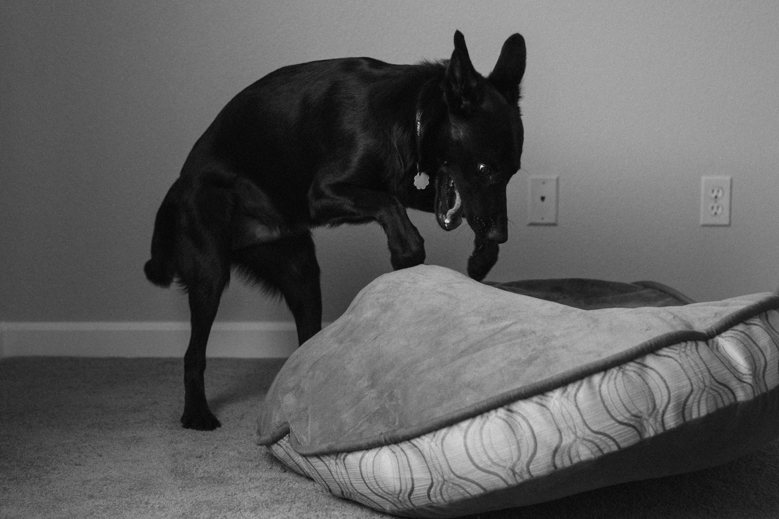 Brody-Amandas-Dog-WEB-04.jpg