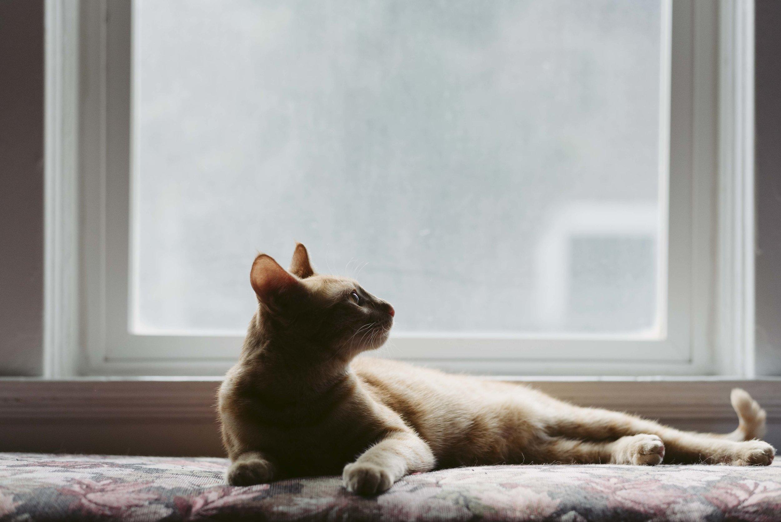 Mattis-Lucys-Cat-WEB-04.jpg
