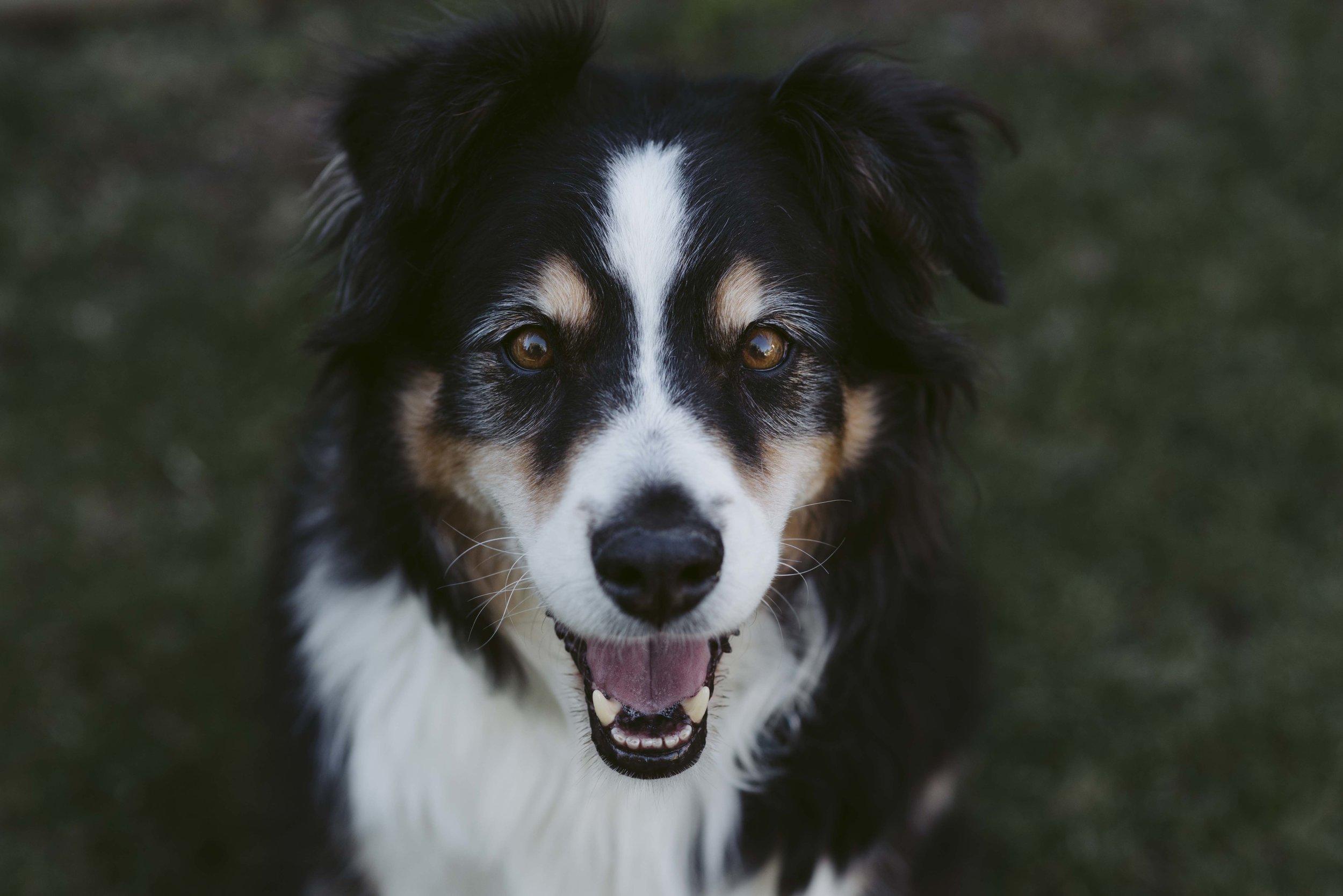 Murphy-Kays-Dog-WEB.jpg