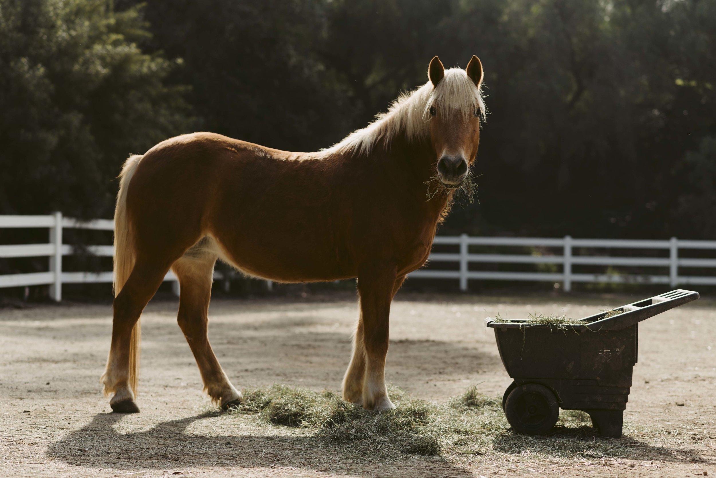 Margo-Kays-Horse-WEB-01.jpg