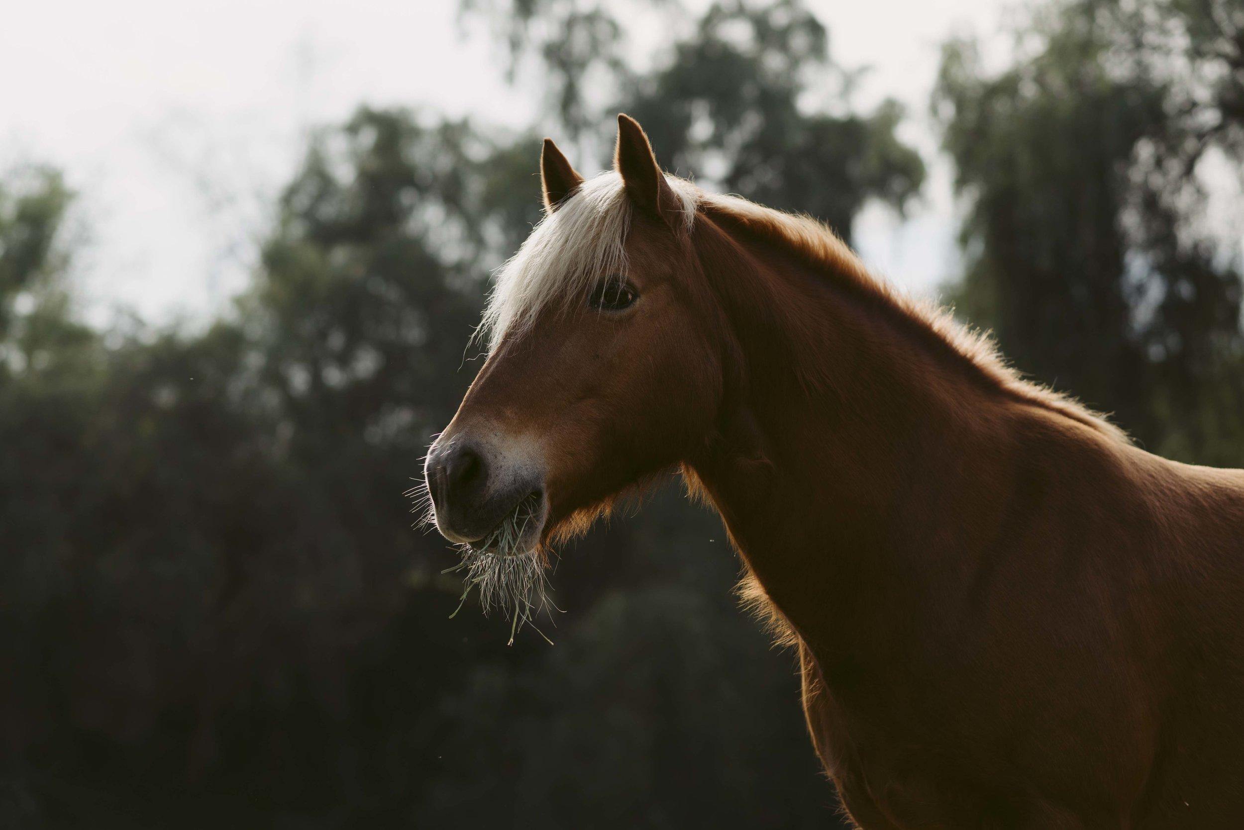 Margo-Kays-Horse-WEB-02.jpg
