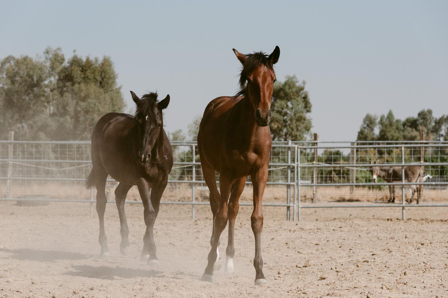 WEB-Foals-Madera-05.jpg