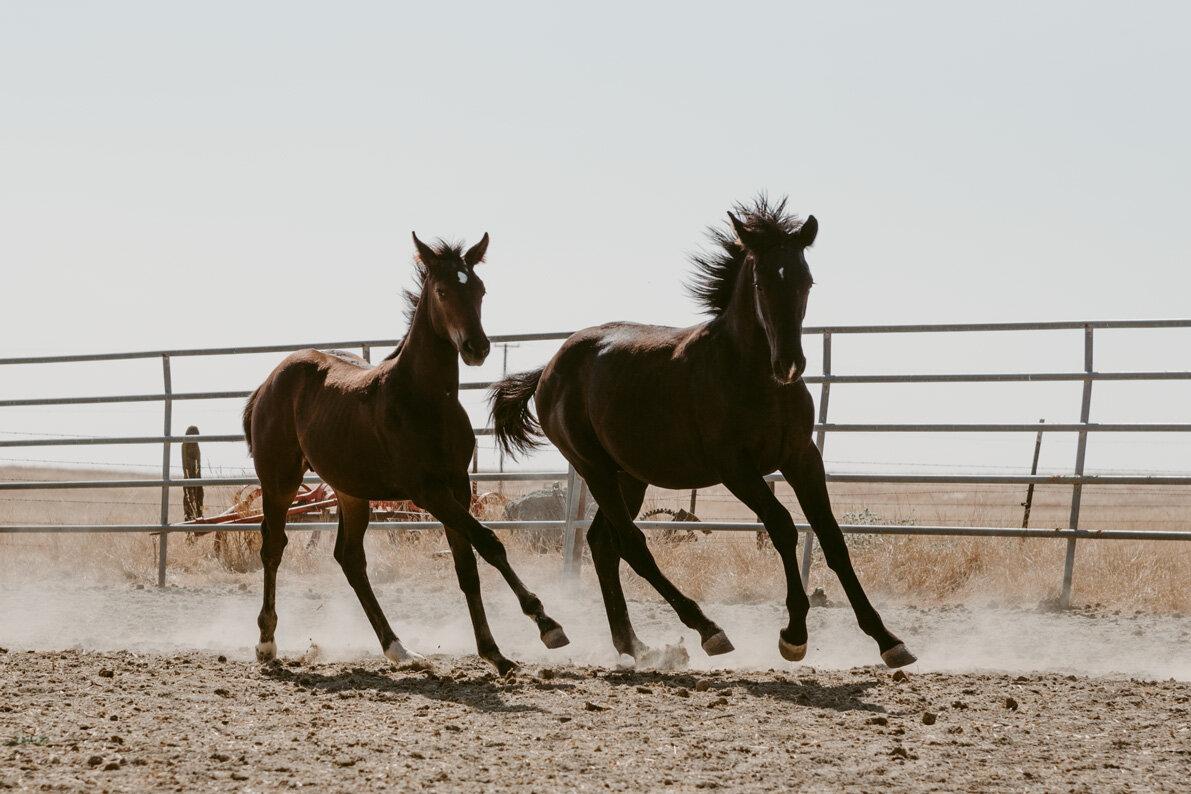 WEB-Foals-Madera-20.jpg