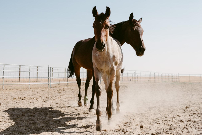 WEB-Foals-Madera-31.jpg
