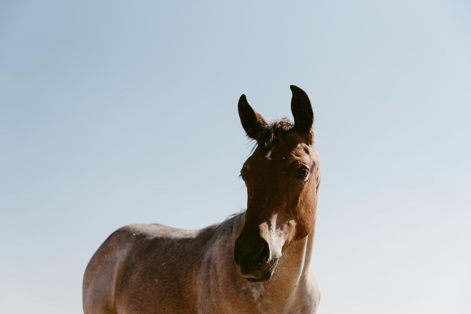 WEB-Foals-Madera-32.jpg